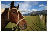 Bagualero Horse