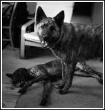 Isaak and Choco