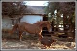 Dog (Drambuie) and Horse