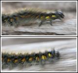 Racing Caterpillar