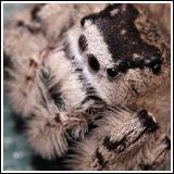 Spider Profile