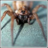 Spider Macro at f2.8