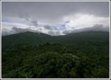 Rainforest View II
