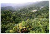 Rainforest View I