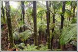 High Rainforest