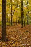 Fall at Mud Lake III