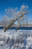 Frosty Morning at Mud Lake I