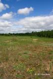 Field behind the Ottawa Airport