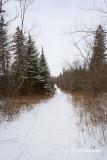 Kerwin Road Trail scene