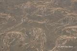Debris on Mud Flats