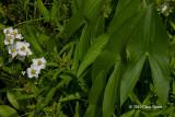 Later Wildflowers (September-October)