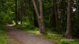 Baxter Conservation Area Forest Scene II