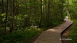 Baxter Conservation Area Forest Scene I