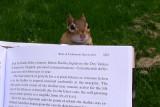 Bookworm Chippy!
