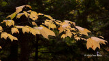 Fall in the Understory