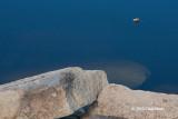 Alone in a Sea of Blue