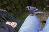 Bird Buddy