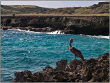 A Pelican Roosts on the Rocky Coast