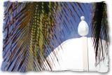 Riviera Maya 2010