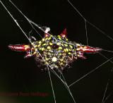 Spiky Spider