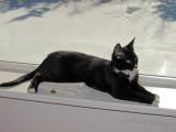 Jimi enjoying a sunny windowsill