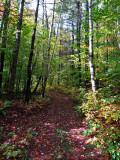 October Woods Walk