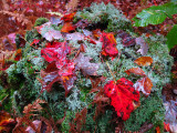 Lichens and Leaves
