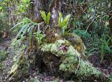 Orchid, Fern, Moss