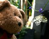 Big Hug little Butterfly?