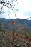 In the heart of Douro region