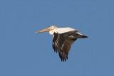 Colorado Breeding Bird Atlas II