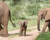 Baby Elephant regards the camera