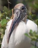 Storks and Hamerkops