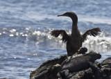 Galapagos Instructional phototour with Arthur Morris,2009