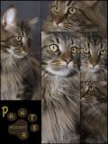 2008_Panter collage-02.JPG