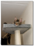 Panter is watching us - 2008_1262865