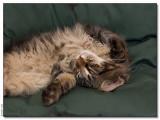 Lazy cat - 2008_1262866