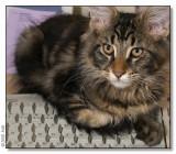 Keyboardcat - 2008_2012884
