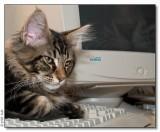 Panter loves Fujitsu - 2008_2012887