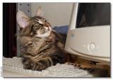 COMPU-CAT - 2008_2012888