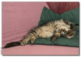 Lazy cat - 2008_1262867