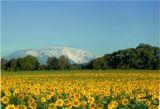 Der Schneeberg, höchster Berg in Niederösterreich