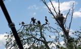Homosassa Springs Wildlife 1