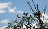 Homosassa Springs Wildlife 2