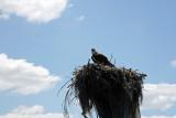 Homosassa Springs Wildlife 5