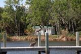 Homosassa Springs Wildlife 7