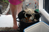 Oops a Female Crab