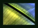Banana LeafBananenblatt