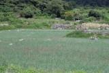 Por el Clima, en la Region se Cultiva Mucha Cebolla