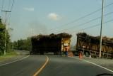 Grandes Camiones Transportan la Produccion de Caña
